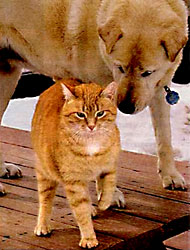 blind dog and seeing eye cat