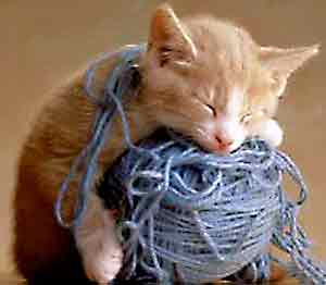"The image ""http://www.whatsnewemu.com/images/sleepCatYarn.jpg"" cannot be displayed, because it contains errors."